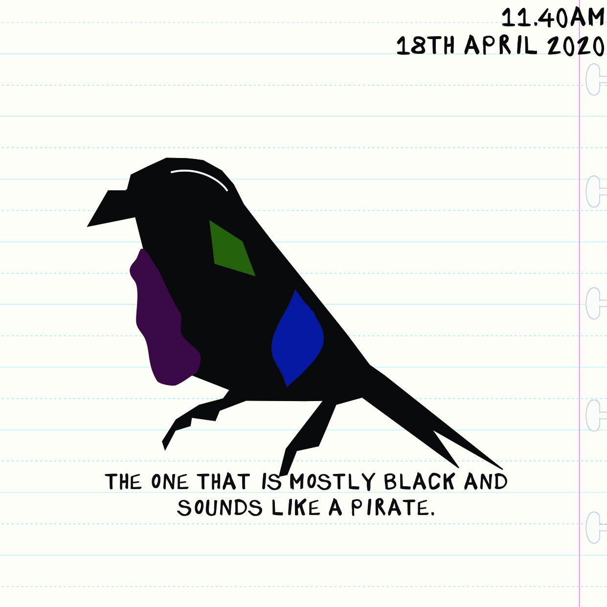 bird 1804