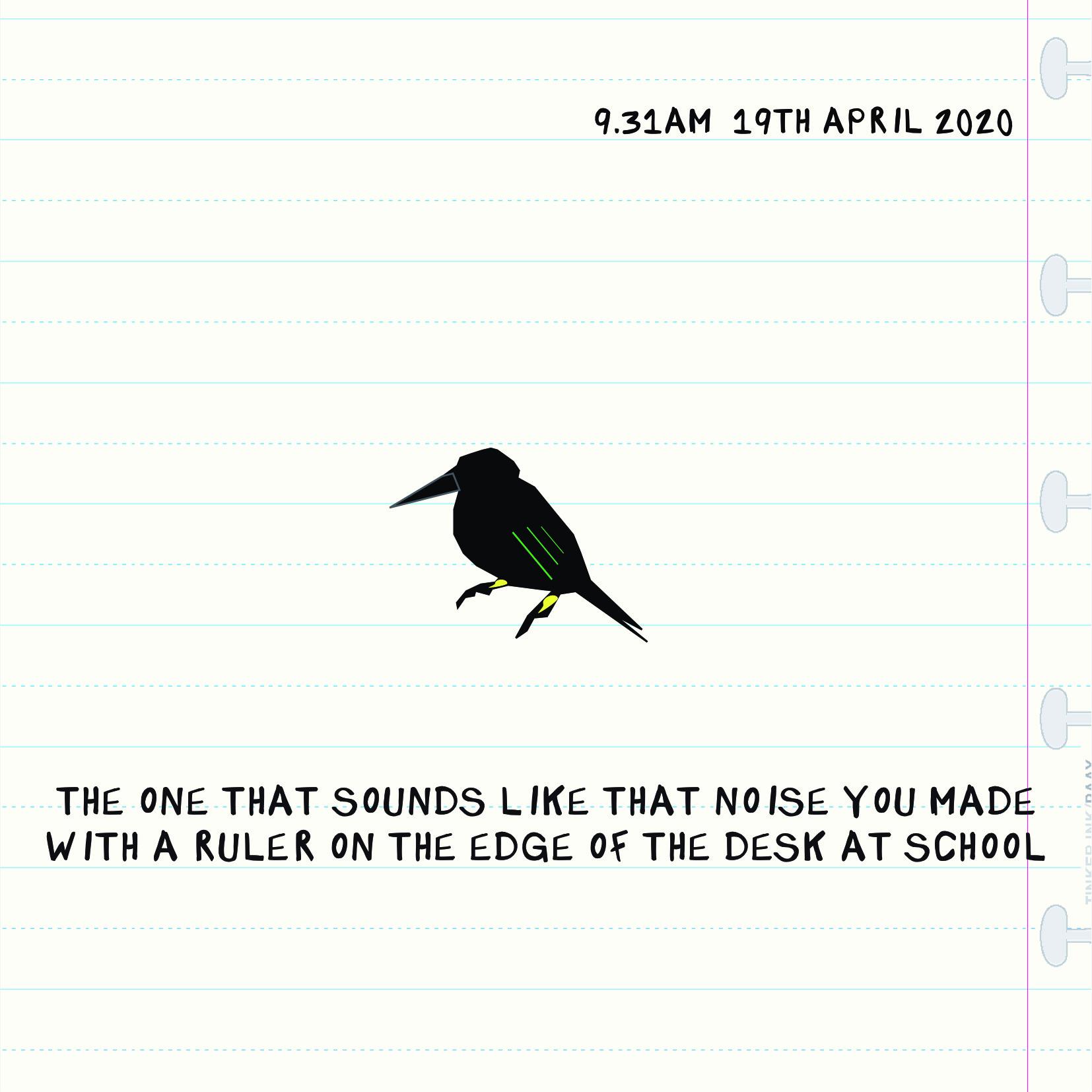 Bird 1904