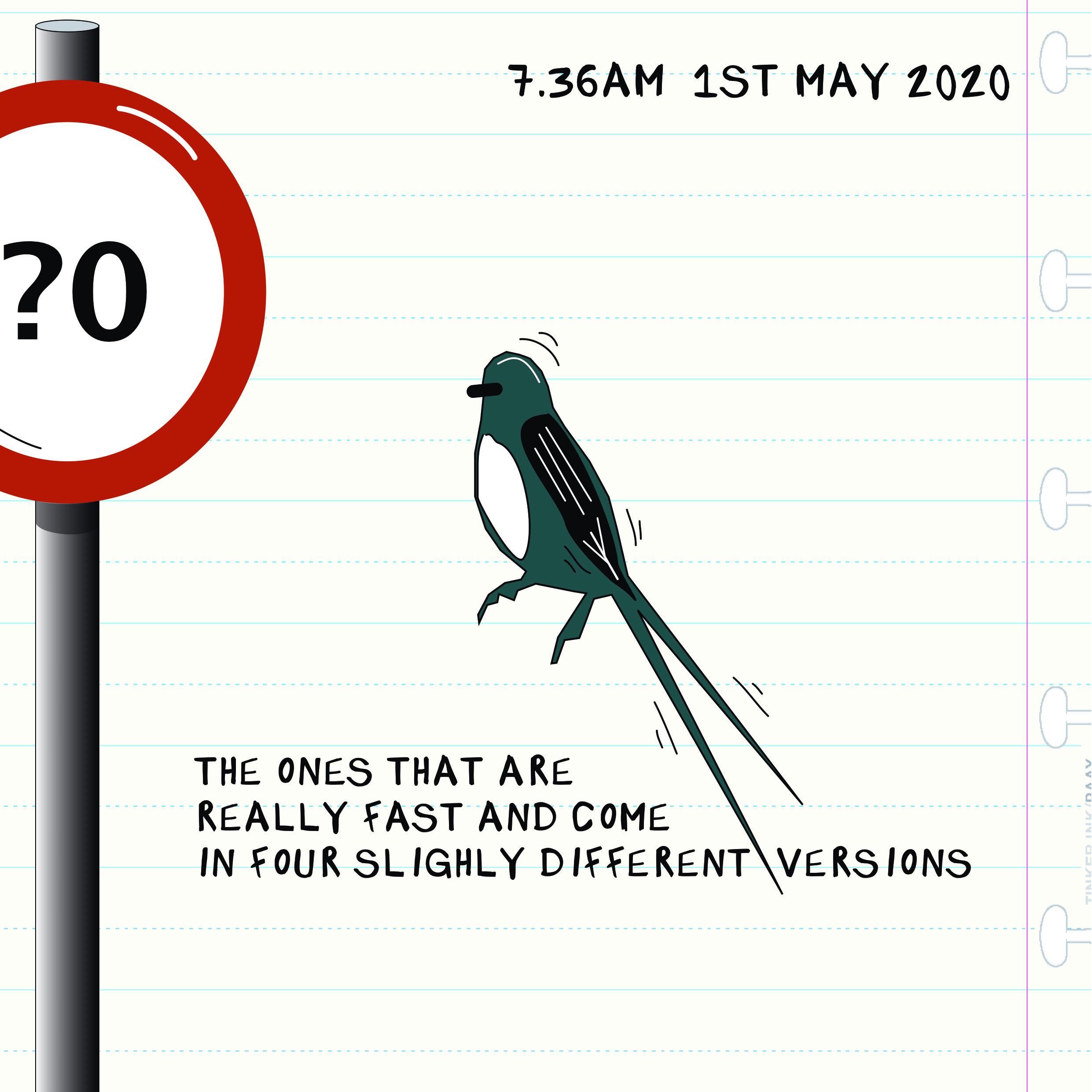Bird Insta 0105