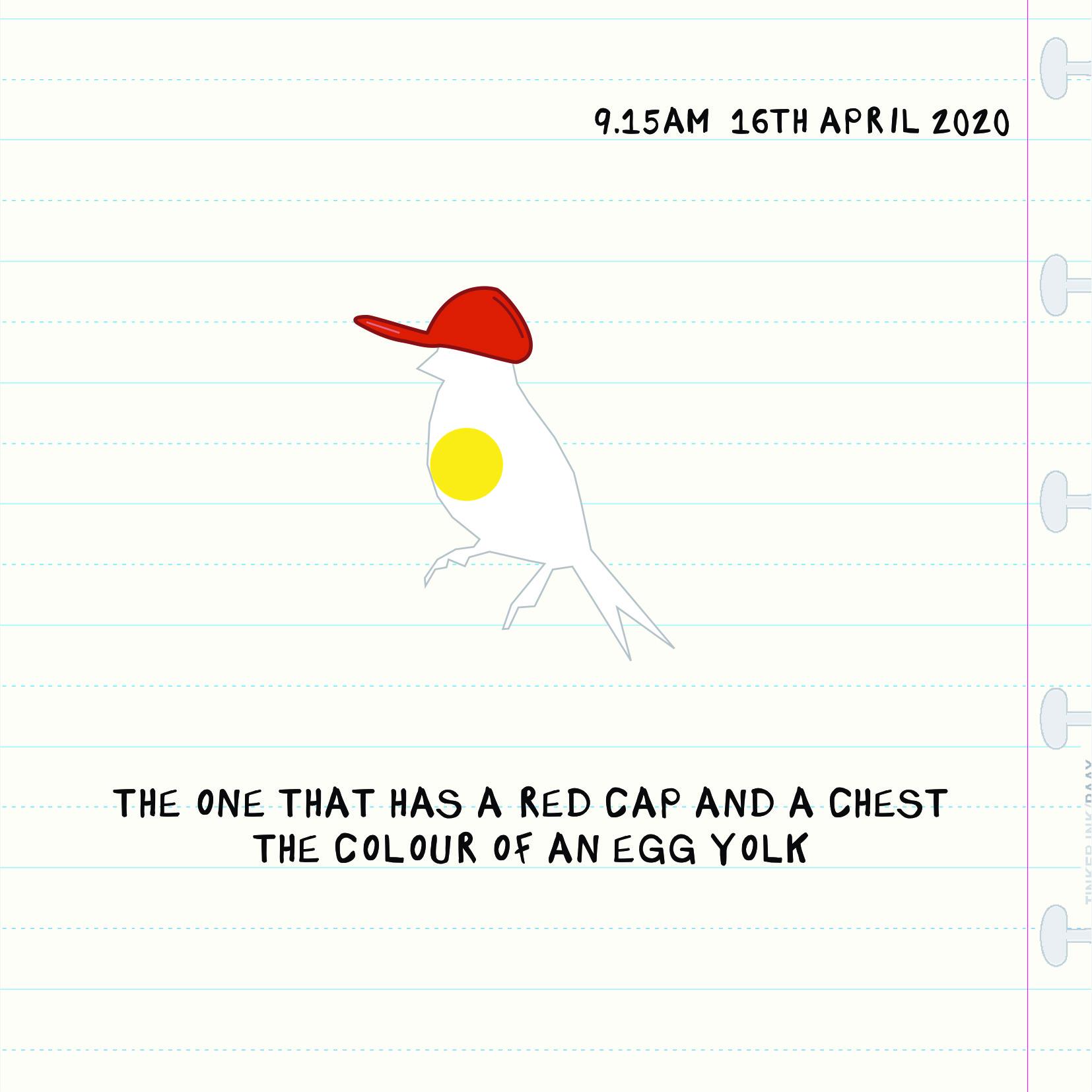 Bird Insta 1604